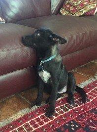 Puppy Sofa